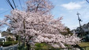 お花見🌸_4602